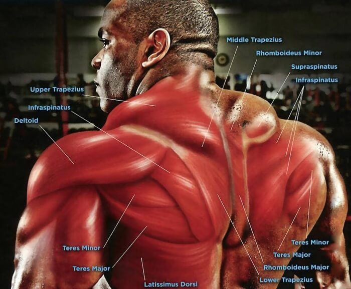 Neck and Back Muscles - Healthy Fitness Workouts Gym Fit