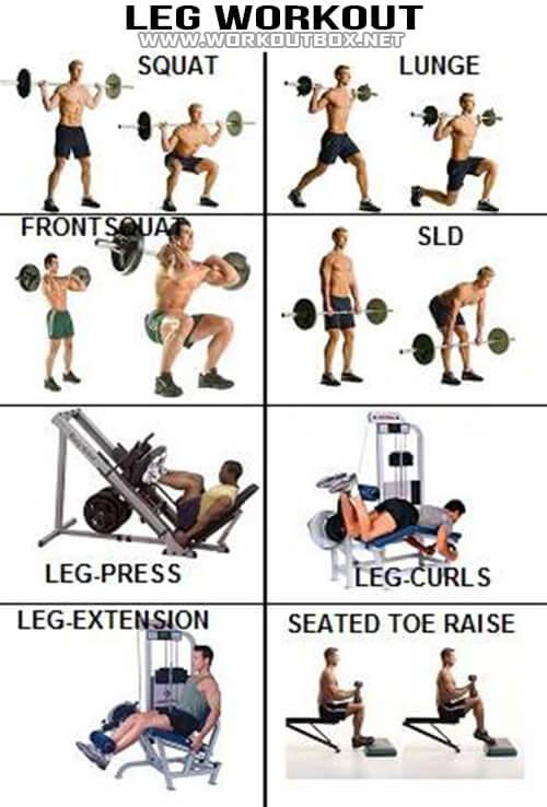 Leg workout healthy fitness exercises calves legs butt