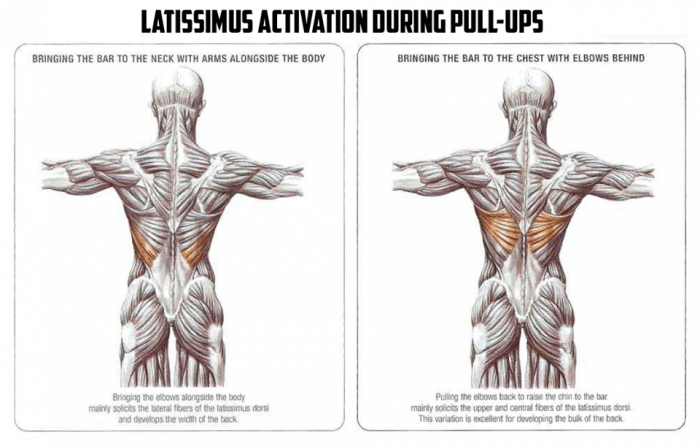 Latissimus Activation During Pull-Ups - Healthy Fitness Workout