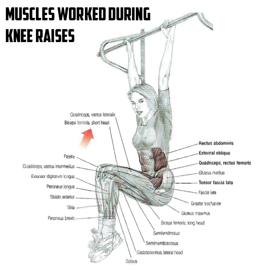 push ups muscles worked diagram