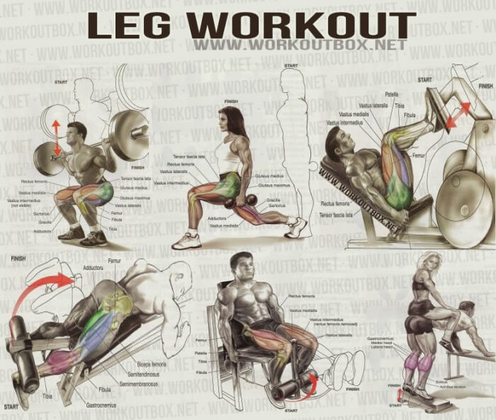 Leg Workout - Healthy Fitness Workout Leg Calves Abs Core Back