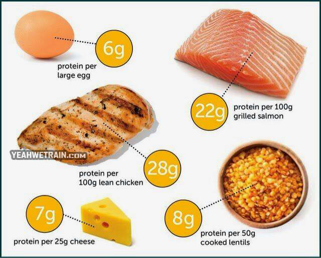 Great Protein Sources - Healthy Workout Tips Sixpack Training