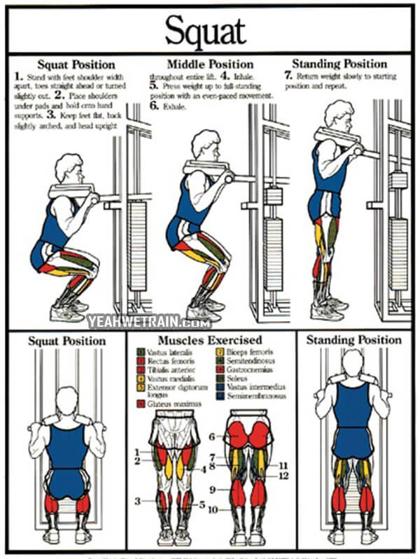 Squat Position And Muscles in Action - Healthy Fitness Leg Butt