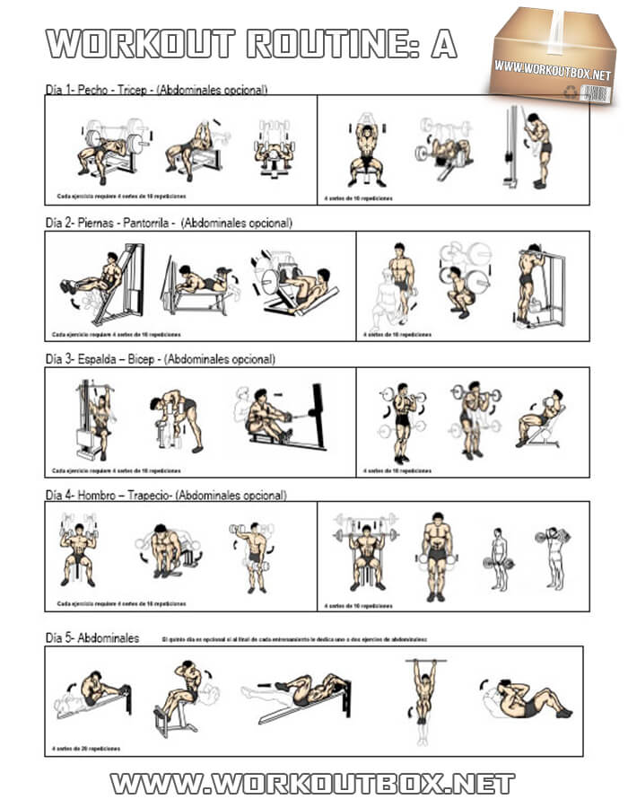 Workout Routine A - Healthy Fitness Full Body Training Plan Gym