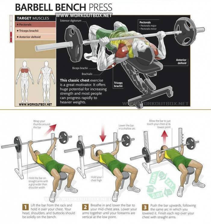 Barbell Bench Press - Chest Exercise Healthy Fitness Tag Muscles