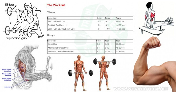 The Biceps & Triceps Workout - Big Arms Healthy Fitness Training