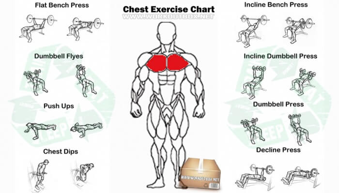 Chest Exercise Chart - Best Fitness Workout Arms Abs Body Fit Ab