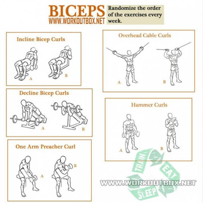 Strong Biceps Workout Train Your Arms Fitness Healthy Gym Abs