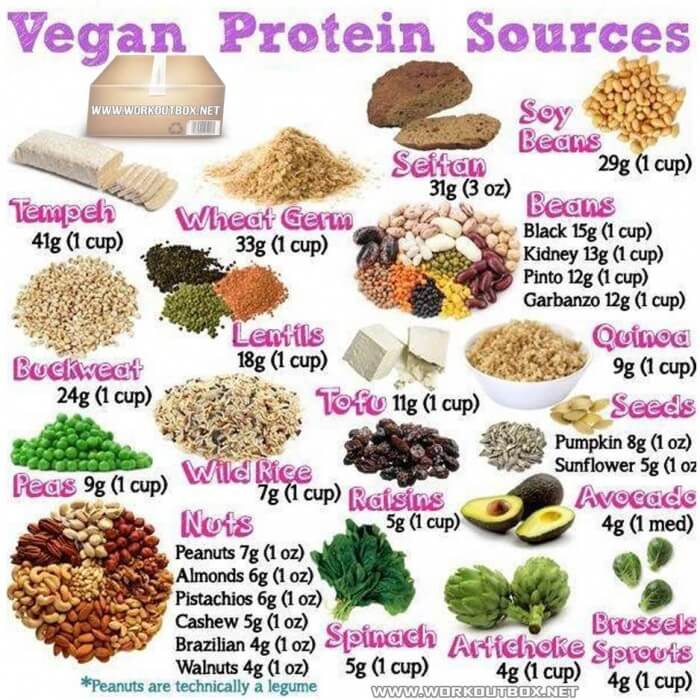 Vegan Protein Source - Beans Lentils Peas Nuts Best Animals Save