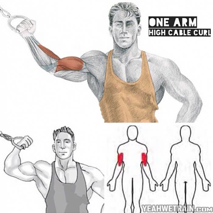 One Arm Cable Curl Exercise ! Bicep And Forarm Training Workout