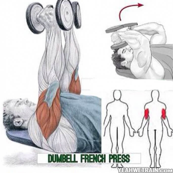Dumbell French Press Exercise ! Tricep Training Workout Forarms
