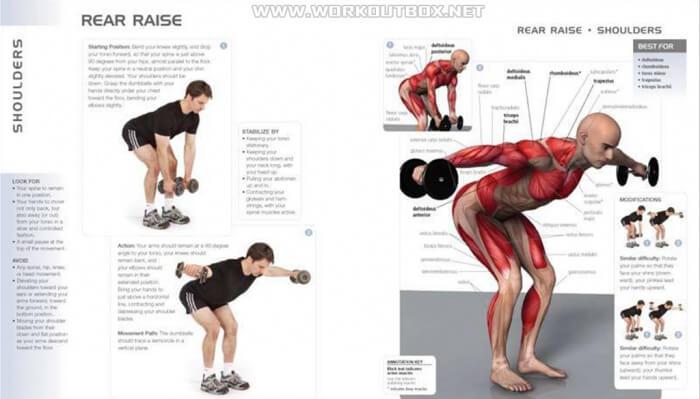 Rear Raise Exercise ! Shoulders Training Workout Arms Back Core