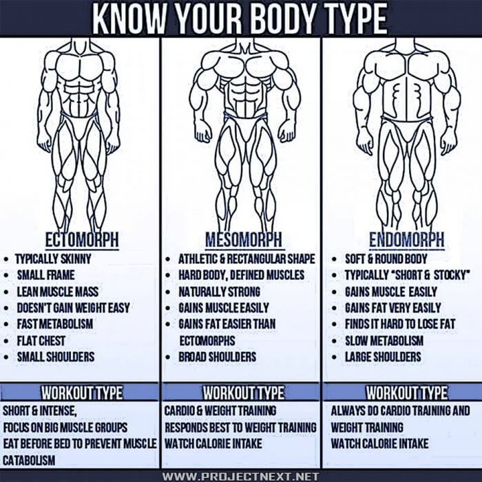 Know Your Body Type? What Is Your Body Type? Ecto Meso Or Endo ...