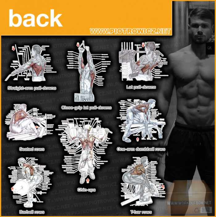 Back Workout Exercises - Best Training Piotrowicz Fitness Low Ab