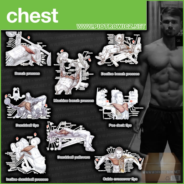 Chest Workout Exercises - Best Training Piotrowicz Fitness Core