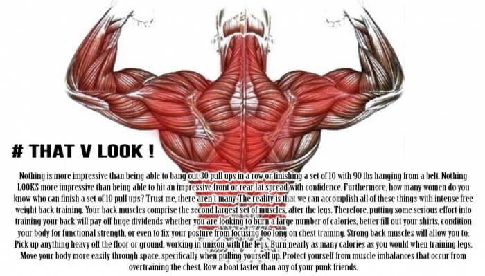 That V Look ! Back Workout Training Information Tips Tricks Low