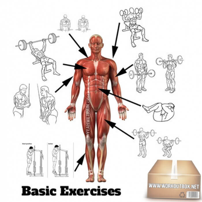 Basic Front Body Exercises Chart - Healthy Fitness Training Plan