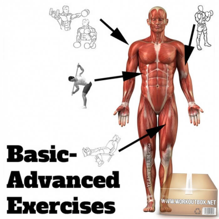 Basic Front Body Advanced Exercises Chart - Healthy Fitness Plan