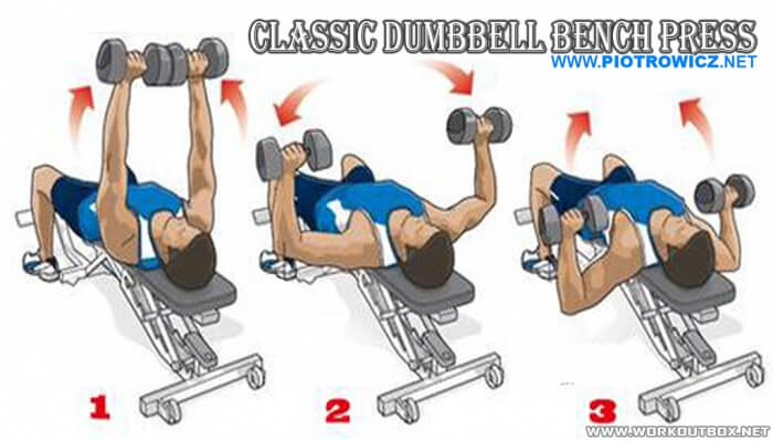 Classic Dumbbell Bench Press - Chest Fitness Workout Arms Biceps