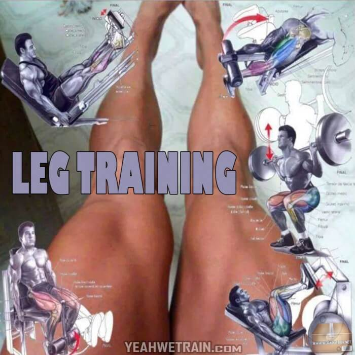 Leg Training - Hardcore Legs Exercises And Workout Routines Calf
