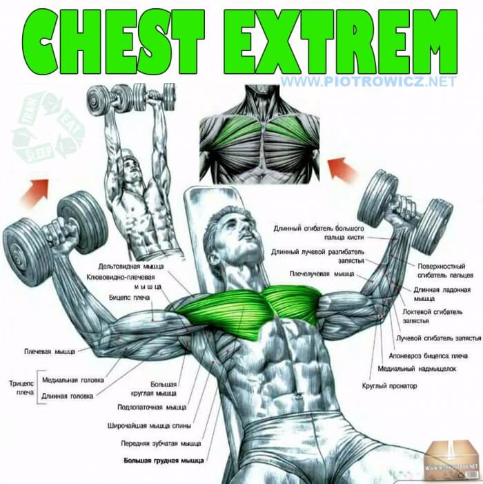 Chest Extrem - Fly Dumbbell Exercise Hardcore Workout Upper Low
