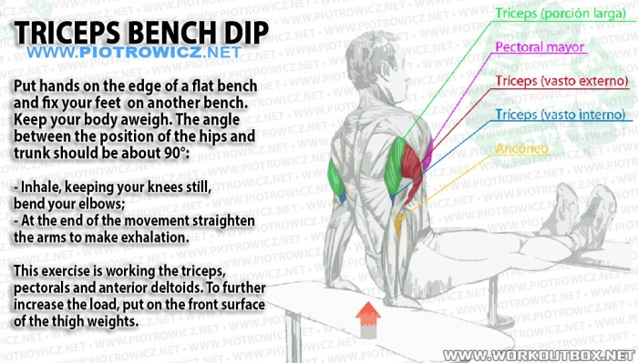 Triceps Bench Dip - Big Tricep Workout Healthy Arm Training Arms