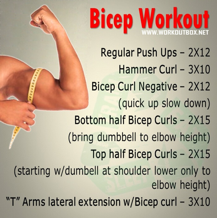 Biceps Workout Best Training Fitness Exercise Arms Triceps Abs