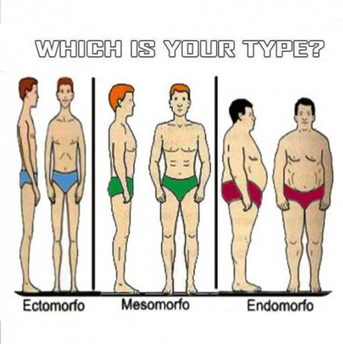 Which Is Your Type? ? Ectomorfo ? Mesomorfo ? Endomorfo ? Commit