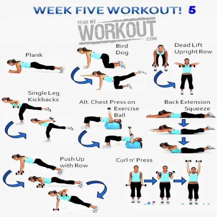 Week Five Workout Plan 5 - Healthy Fitness Full Body Training Ab