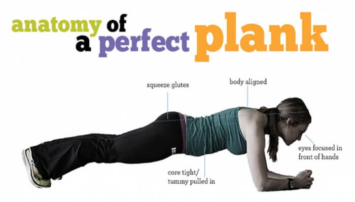 Anatomy Of A Perfect Plank - Health Sixpack Fitness Workout Abs